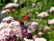 Blog-Nachrichten live von dw-agency